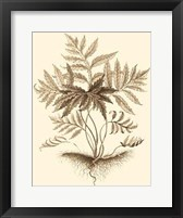 Framed Sepia Munting Foliage IV