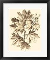 Framed Sepia Munting Foliage V