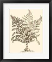 Framed Sepia Munting Foliage VI
