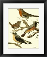 Framed Domestic Bird Family III