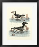 Framed Aquatic Birds II
