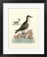Framed Aquatic Birds III
