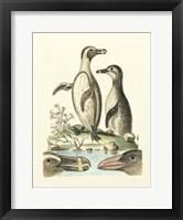 Framed Aquatic Birds IV