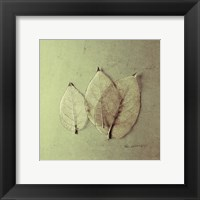 Trio of Skelton Leaves Framed Print