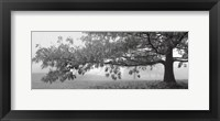 Framed Autumn Oak