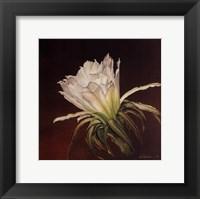 Framed Sun Kissed Bloom