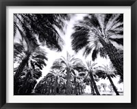 Framed Spinning Palms