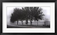 Framed Row Of Trees 2