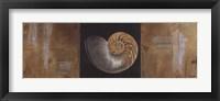 Seashells II Framed Print