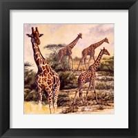 Framed Safari III