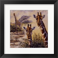 Safari IV Framed Print