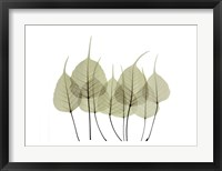 Woodlands I Framed Print