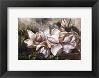 Dawning Magnolias Framed Print