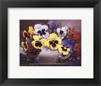 Framed Rainbow of Pansies