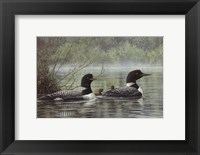 Framed Northern Reflections - Loons