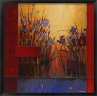 Iris Sunrise Framed Print