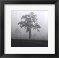 Framed Fog Tree Study I