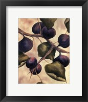 Italian Harvest - Figs Framed Print