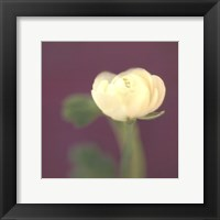 Ivory on Aubergine Framed Print