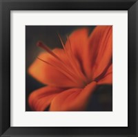 Orange on Turquoise Framed Print