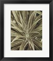 Tropica IV Framed Print