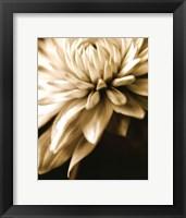 Radiance IV Framed Print