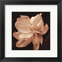 Timeless Grace II Framed Print