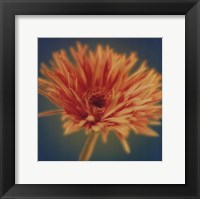 Framed Chrysanthemum on Turquoise