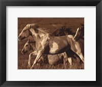 Like the Wind I Framed Print