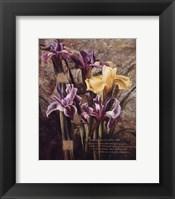 Framed Spring's Bounty
