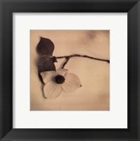 Sepia Dogwoods I Framed Print