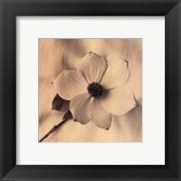 Sepia Dogwoods IV Framed Print