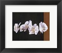 Framed Orchid Study I