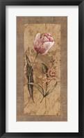 Framed Antique Tulip