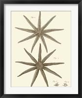 Framed Striking Starfish III