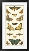 Butterfly Panel I Framed Print