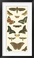 Butterfly Panel II Framed Print