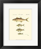 Framed Fish Anthology II