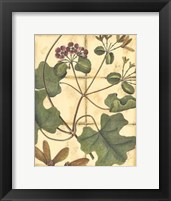 Framed Printed Rustic Garden I