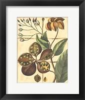 Framed Printed Rustic Garden II