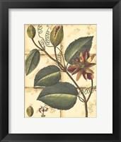 Framed Printed Rustic Garden IV
