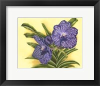 Framed Vibrant Orchid III