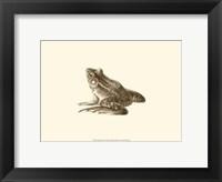 Framed Sepia Frog I