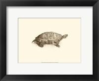 Framed Sepia Turtle I