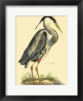 Framed Small Great Blue Heron