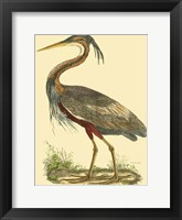Framed Small Purple Heron