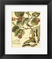 Framed Mini Whimsical Butterflies I