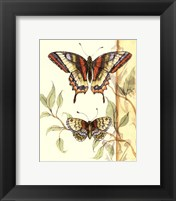 Framed Mini Tandem Butterflies II