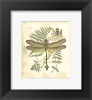 Framed Mini Regal Dragonfly III