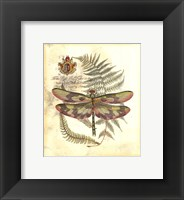 Framed Mini Regal Dragonfly IV